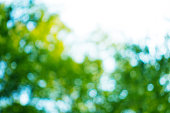 istock bokeh in sunny forest 517270396