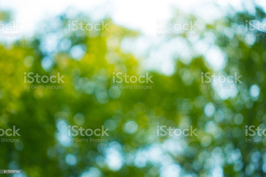 bokeh in sunny forest stock photo
