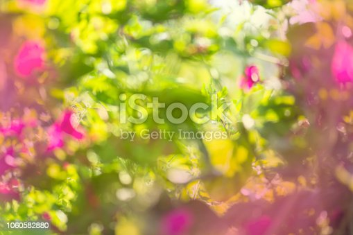 639809128istockphoto Bokeh light abstract background. Green pink bokeh background. 1060582880