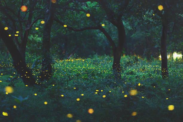 ボケ味の森でホタルの光 - 幻想 ストックフォトと画像