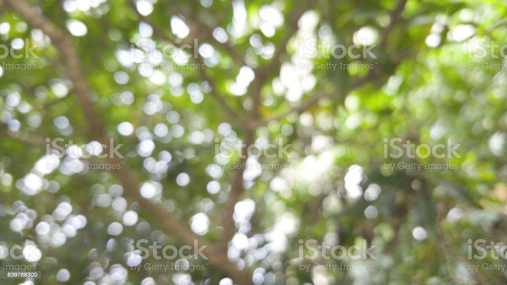 Bokeh lights of the tree. stock photo