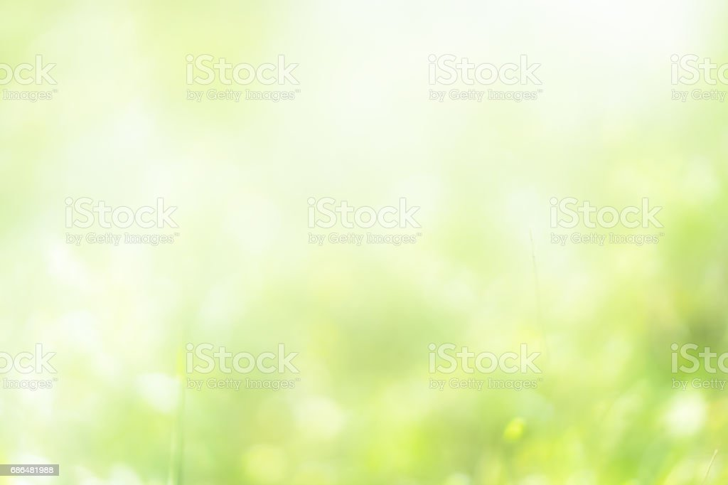nature bokeh stock photo