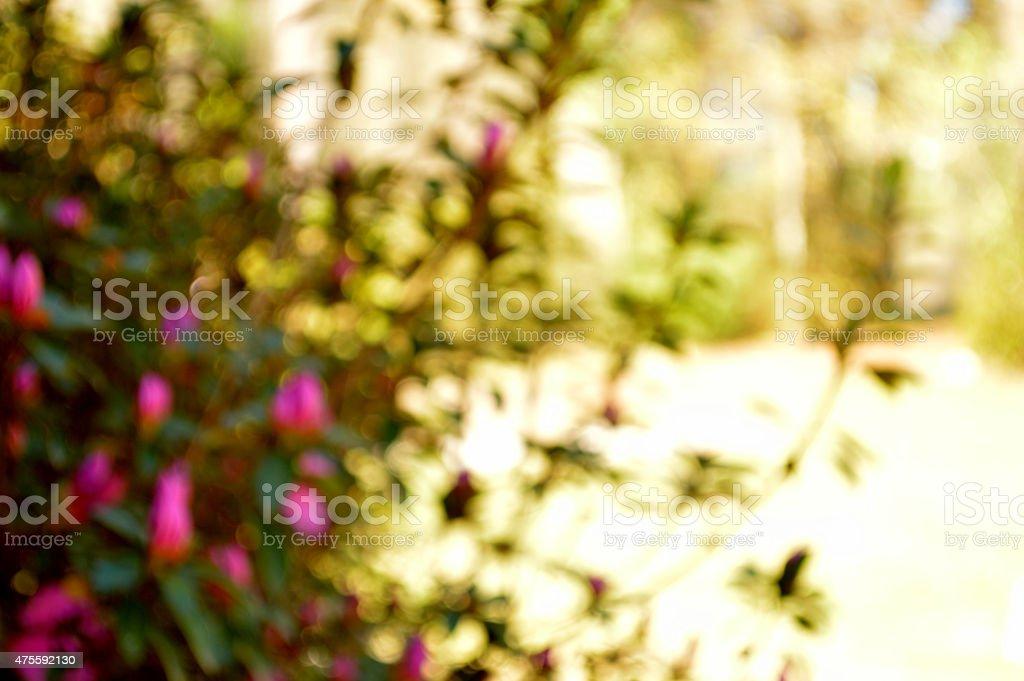 Bokeh photo of bright fuschia azaleas and wrought iron column stock photo