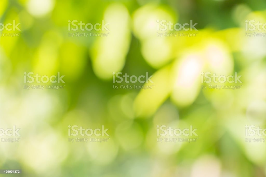 Bokeh-style blurred photo of green leaves stock photo
