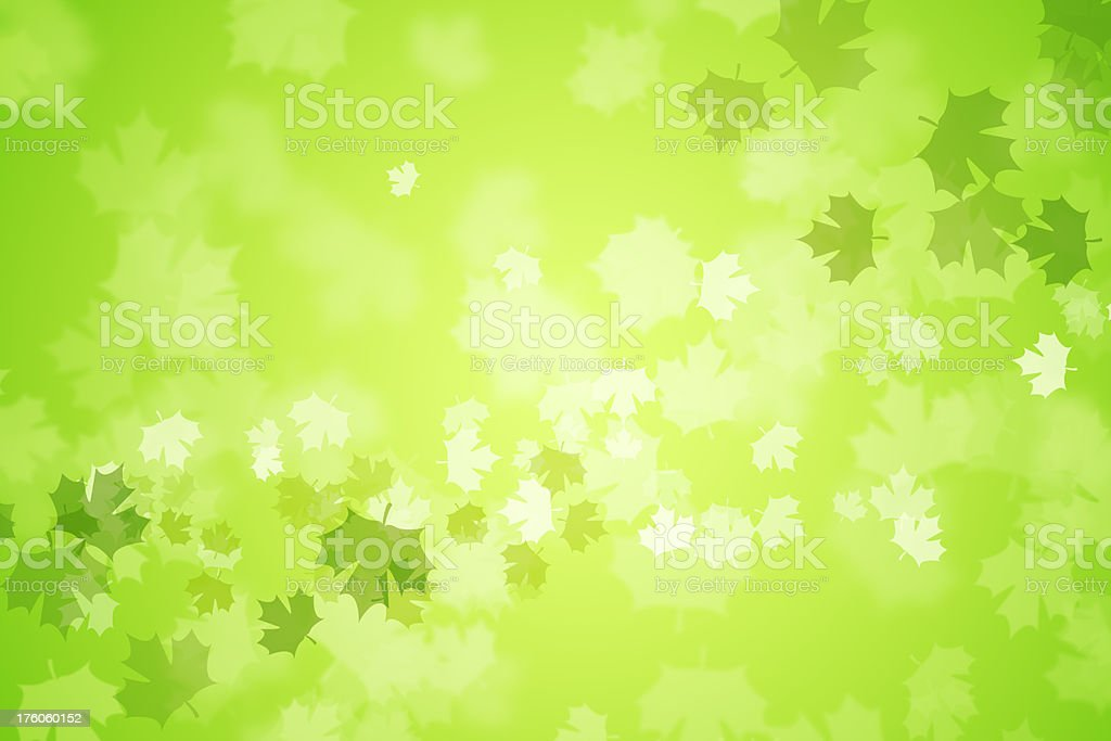 Boken green maple leaves royalty-free stock photo