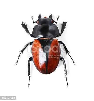 istock Bold and beautiful beetles 522127253