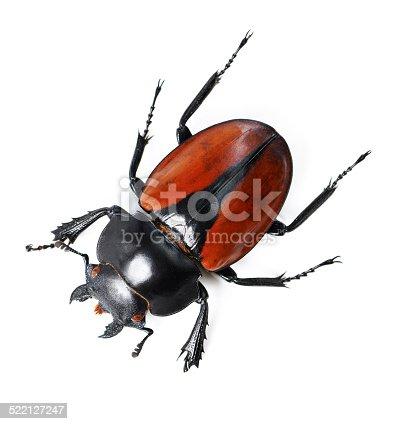 istock Bold bug 522127247