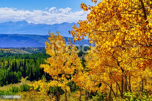 Bold Vivid Fall Colors Aspen Trees - Wide angle view with brilliant autumn hues.
