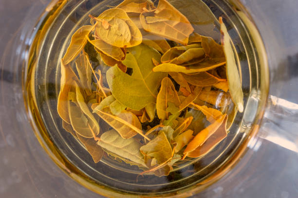 Boldo Tea Leaves Brewing In Water stock photo