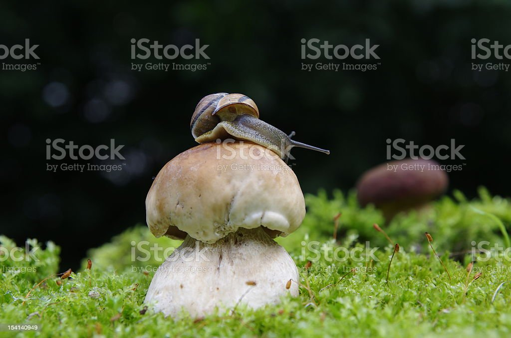 boletus and snail stock photo