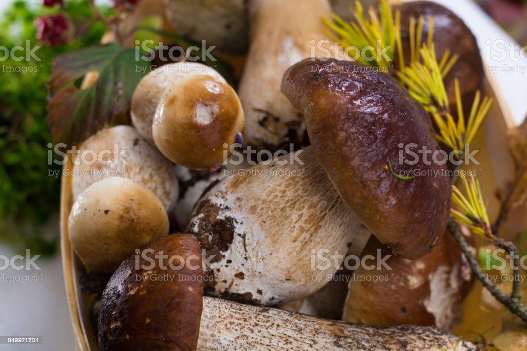 Boletus edulis, cepe, setas sin lavar sobre fondo de madera blanco - foto de stock