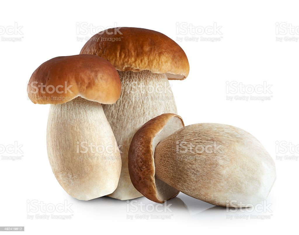 Boletus edulis (king bolete) isolated on white background. stock photo