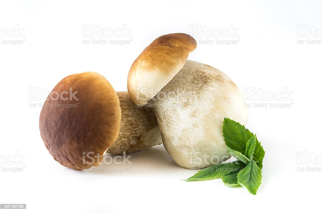 Boletus edulis stock photo