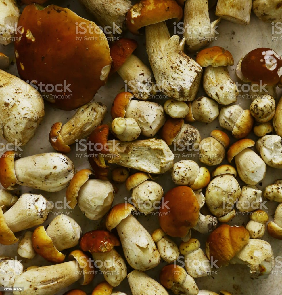 boletus mushrooms background stock photo