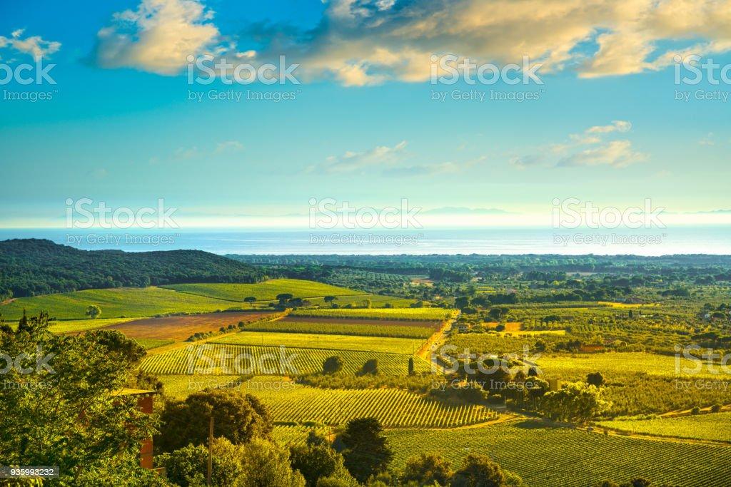 Bolgheri and Castagneto vineyard aerial view on sunset. Maremma Tuscany, Italy - foto stock