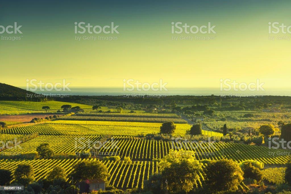 Bolgheri and Castagneto vineyard aerial view sunset. Maremma Tuscany, Italy - foto stock