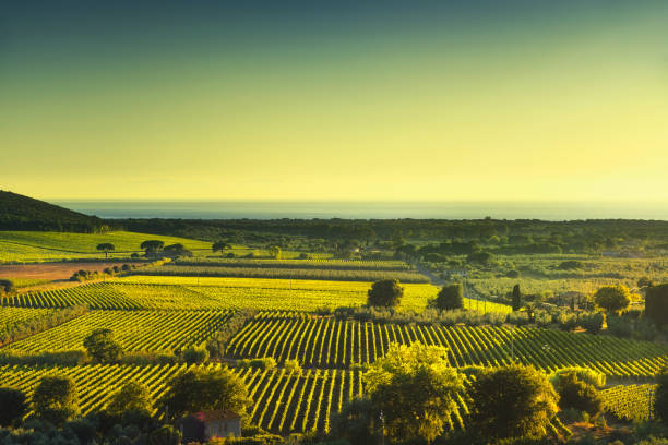 Bolgheri and Castagneto vineyard aerial view sunset. Maremma Tuscany, Italy - foto stock