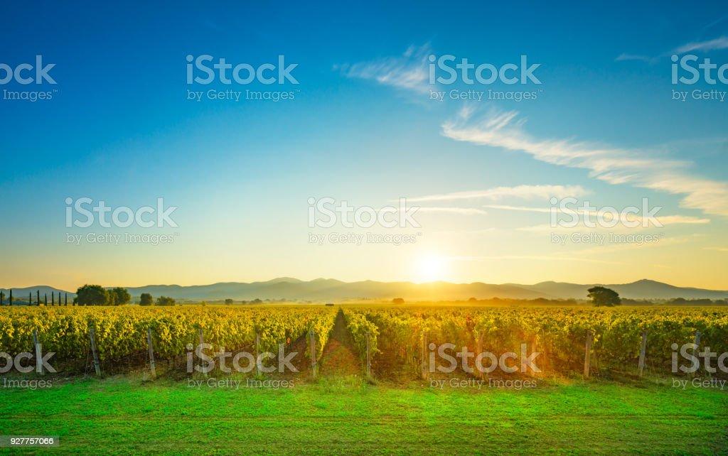 Bolgheri and Castagneto vineyards sunrise backlight. Maremma Tuscany, Italy - foto stock