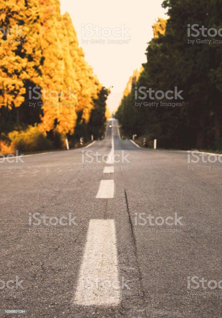 Bolgheri cypress road at sunset, Tuscany, Italy - foto stock