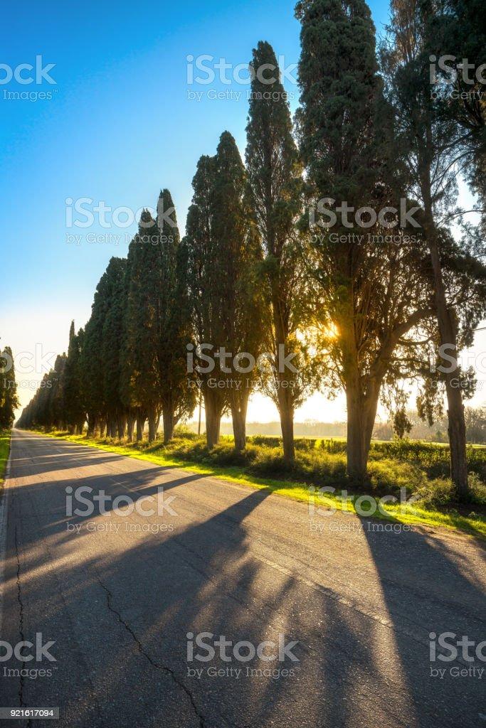 Bolgheri famous cypresses tree straight boulevard. Maremma, Tuscany, Italy - foto stock
