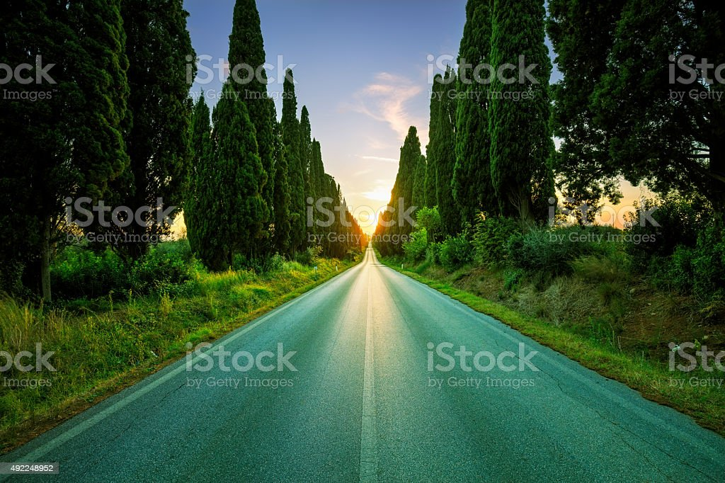 Bolgheri famous cypresses tree straight boulevard on backlight s stock photo