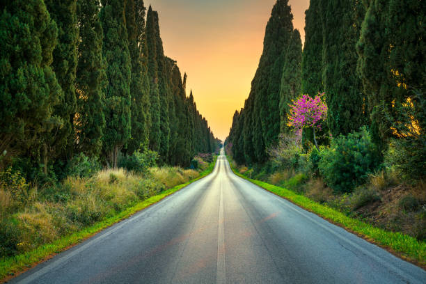 Bolgheri famous cypresses tree straight boulevard on sunset. Maremma, Tuscany, Italy - foto stock