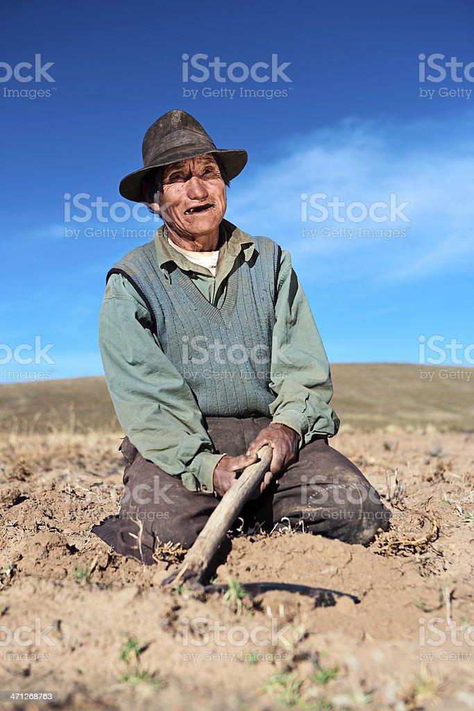 Bolivian man harvesting potatoes near Oruro, Bolivia stock photo