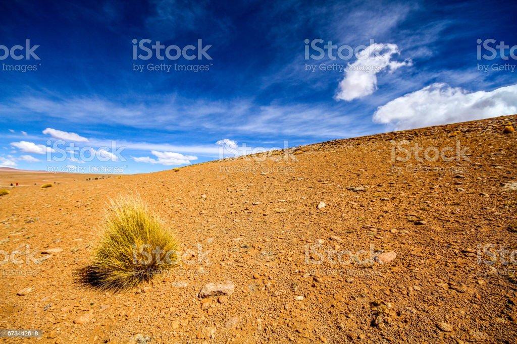 Bolivian Tumbleweed stock photo