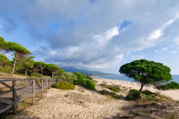 Bolonia Dune, Provinz Cadiz, Andalusien, Spanien – Foto