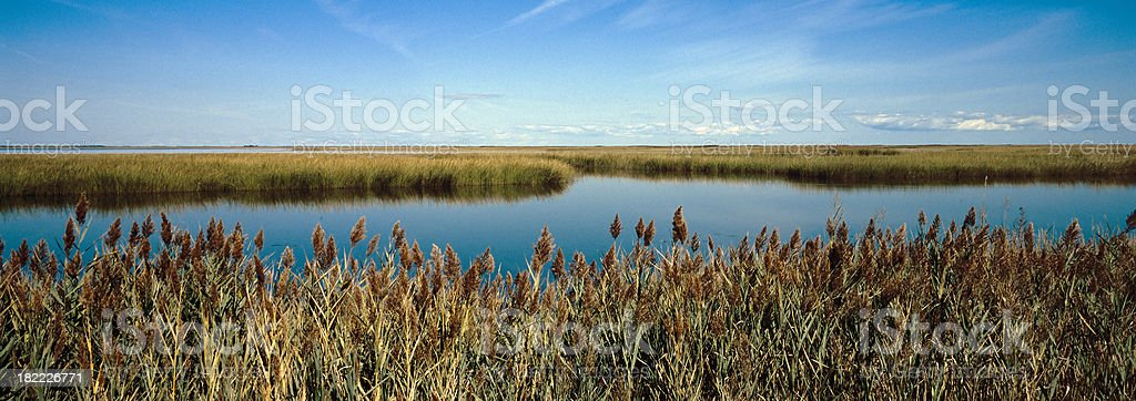 Bombay Hook Marshes stock photo
