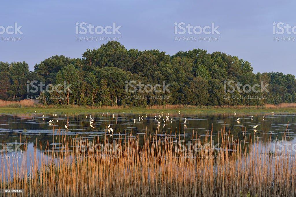 Bombay Hook National Wildlife Refuge stock photo