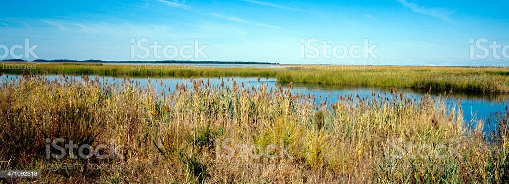 Bombay Hook Wildlife Refuge royalty-free stock photo