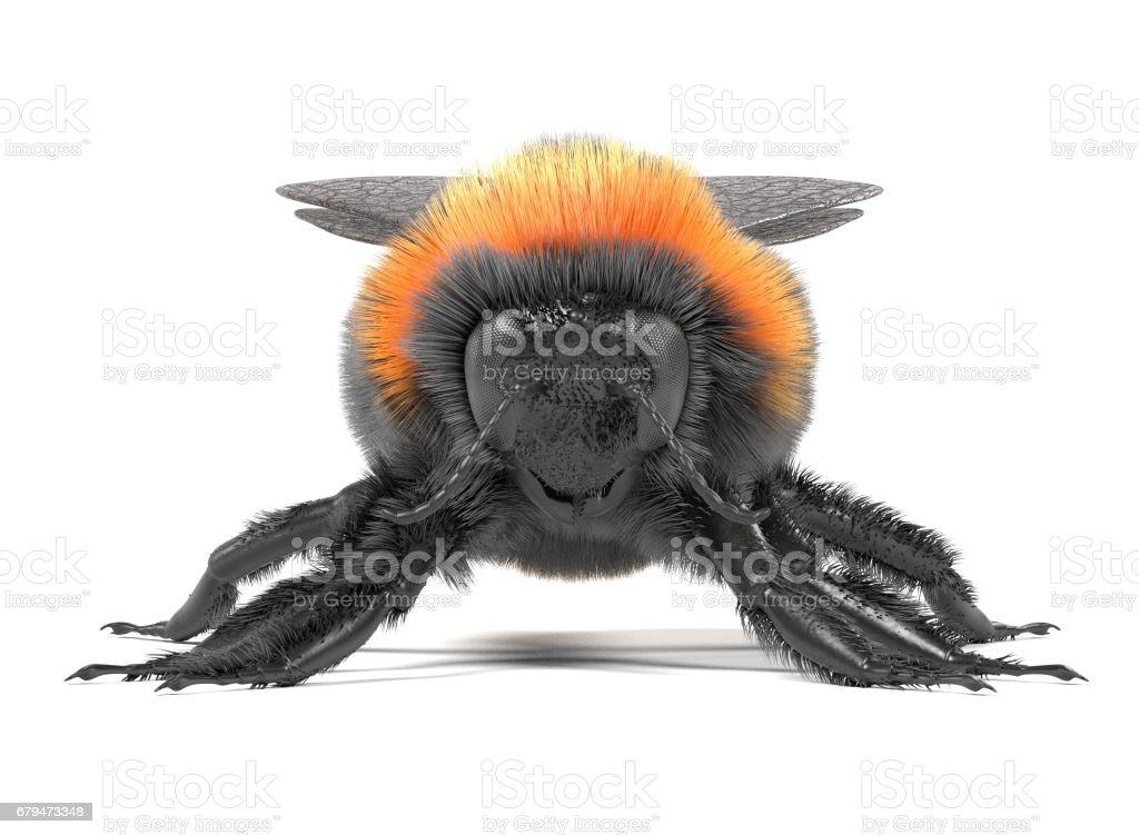 熊蜂蒺藜 免版稅 stock photo