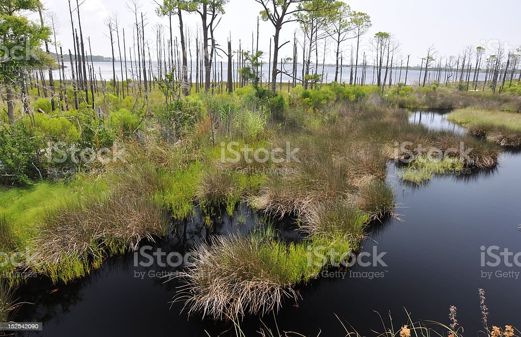 Bon Secour National Wildlife Refuge stock photo