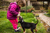 Adorable little girl holding a wooden stick while her mixed breed puppy pulling the stick from her hands