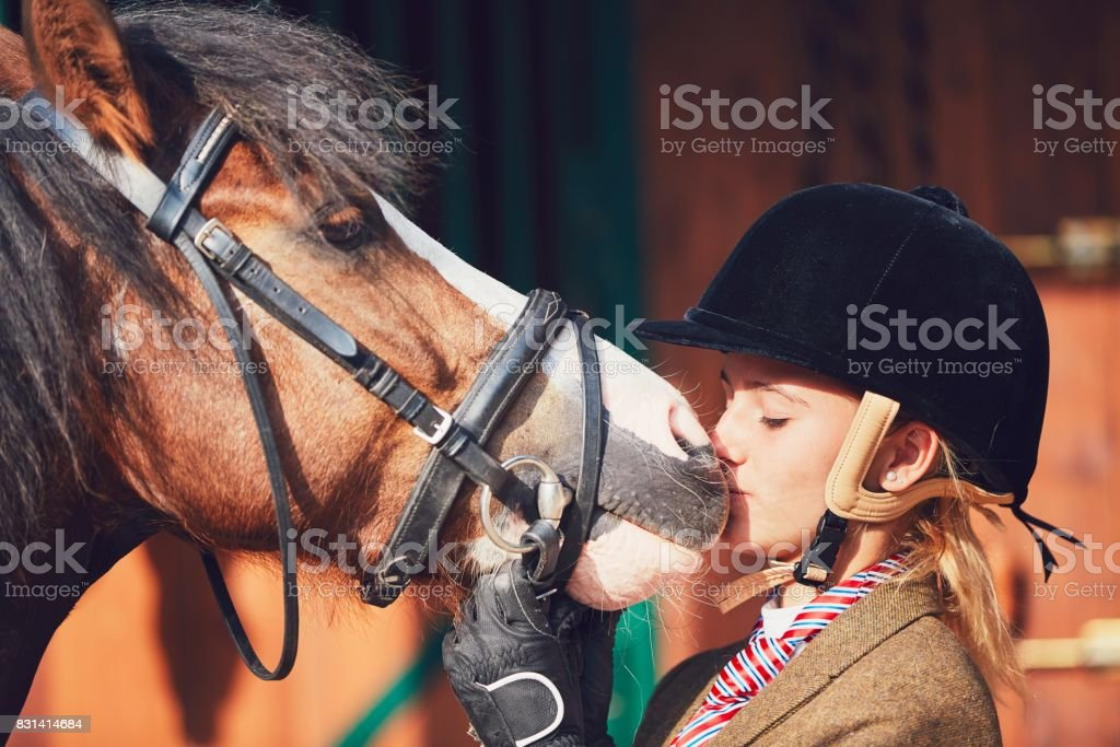 Bond between horse and rider stock photo