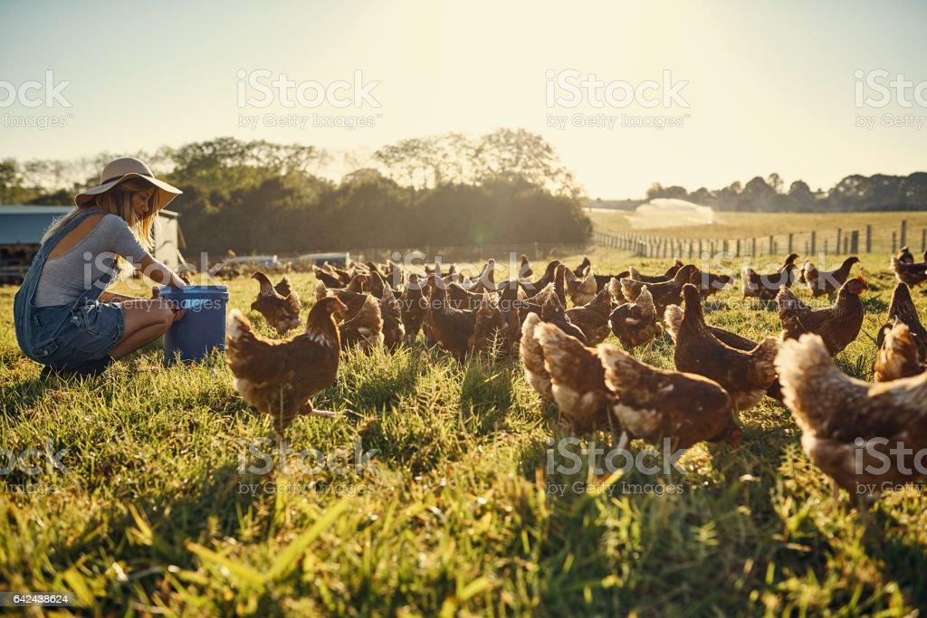 Bonding with her flock stock photo