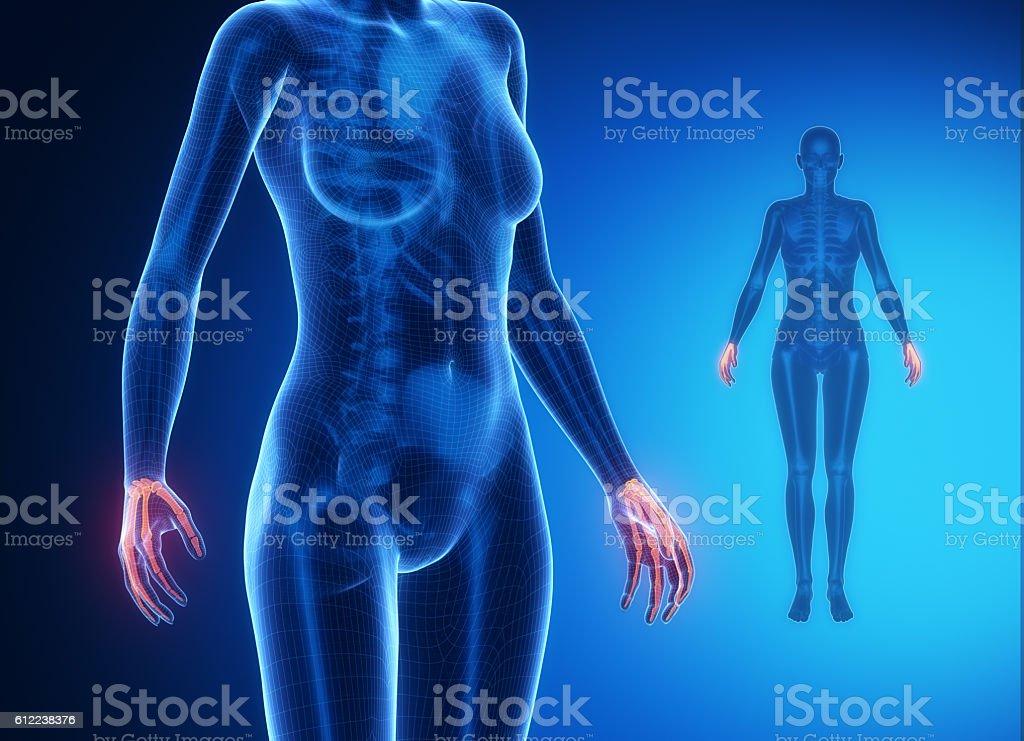 Wrist Bone Anatomy Xray Scan Stock Photo Istock