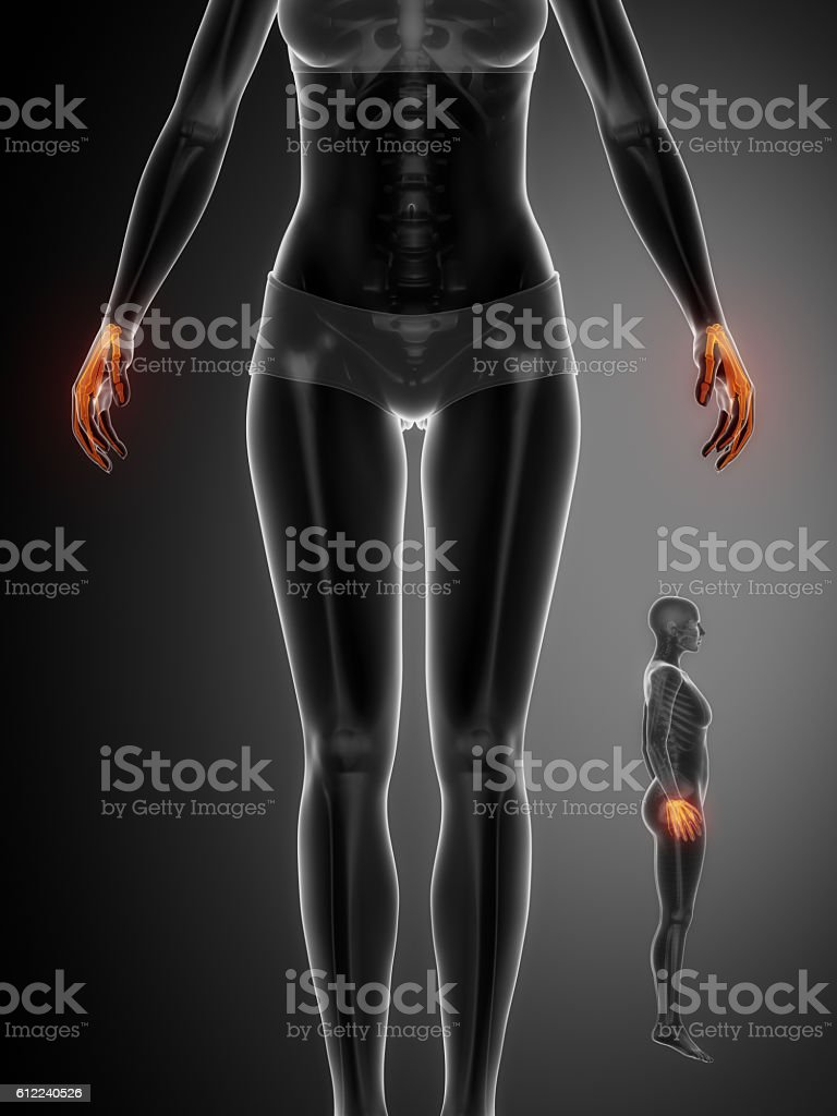 Wrist Bone Anatomy Xray Scan Stock Photo Istock