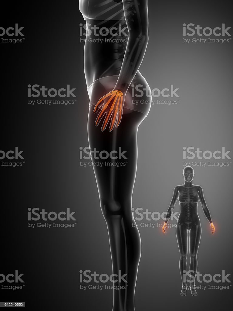Wrist Bone Anatomy Xray Scan Stock Photo More Pictures Of Adult