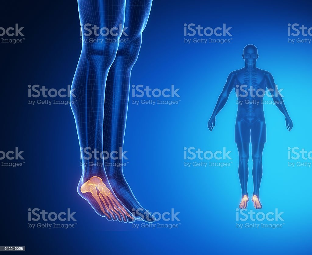 Ankle Bone Anatomy Xray Scan Stock Photo More Pictures Of Achilles