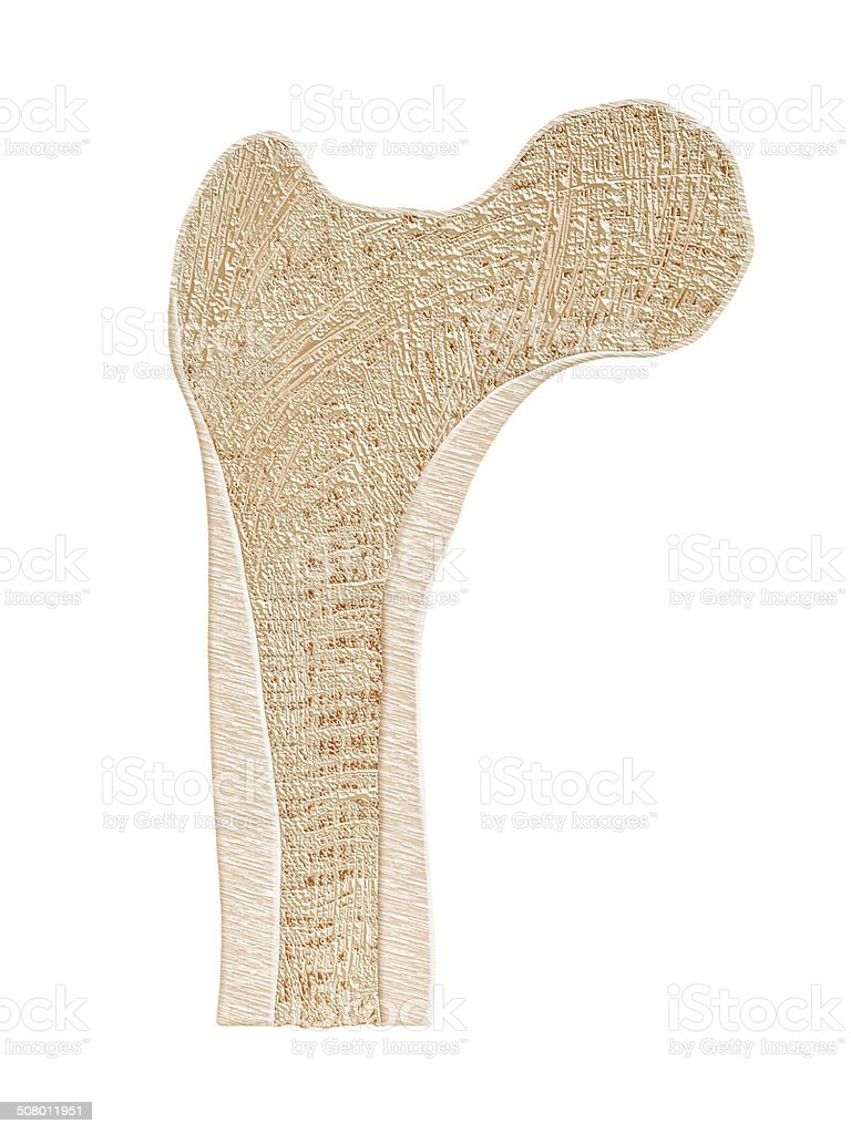 Bone Cross Section stock photo