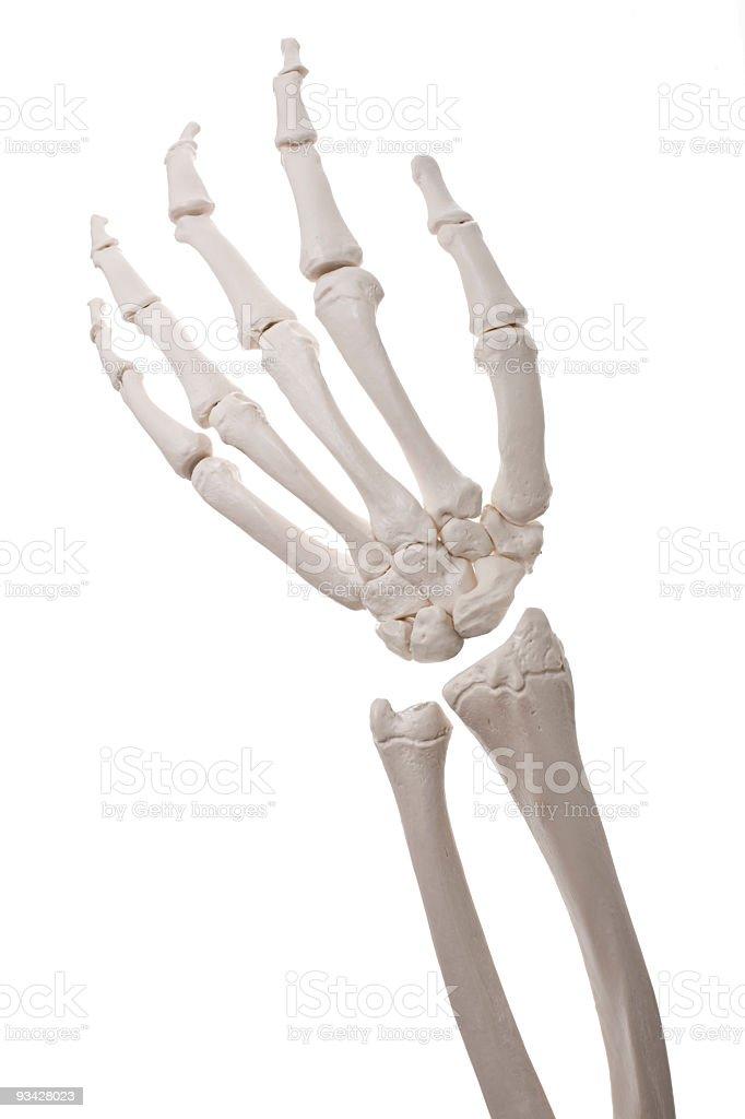 Bone Hand royalty-free stock photo