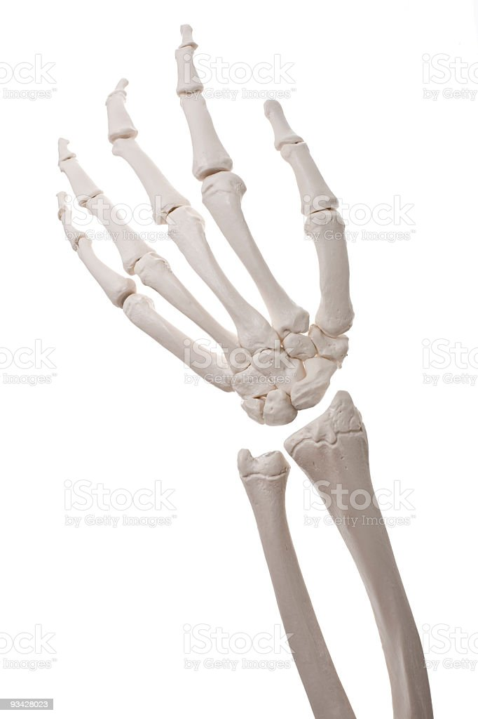 Bone Hand stock photo