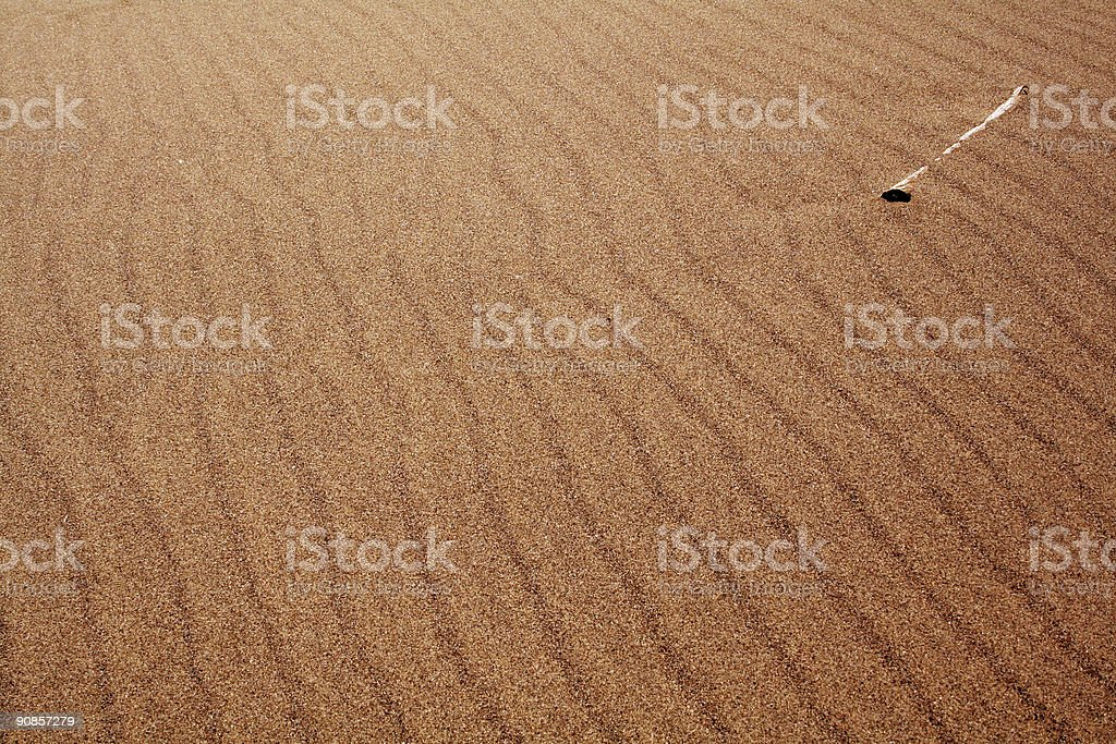 Bone in the Sand stock photo