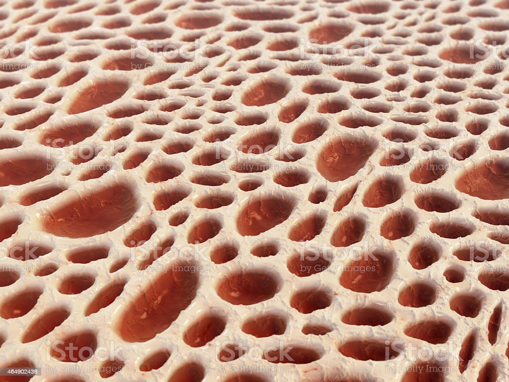 Bone tissue structure stock photo