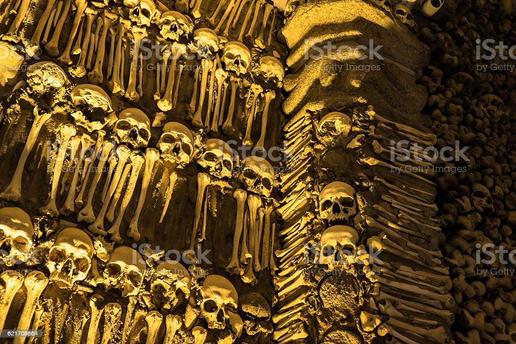Bone wall stock photo