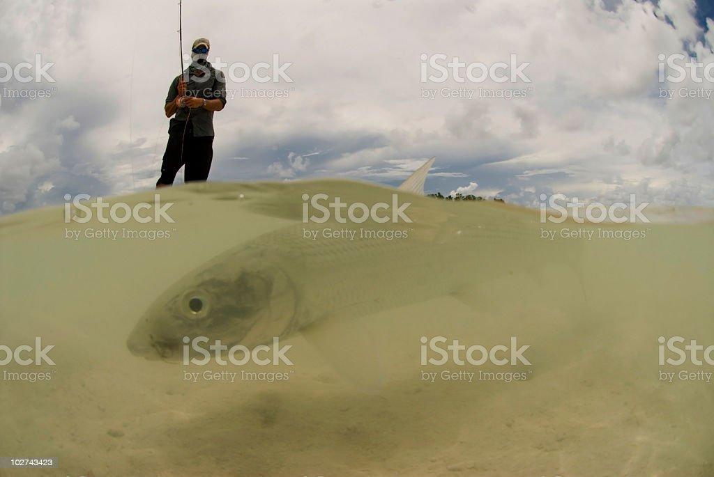 bonefish caught by fly fisherman stock photo