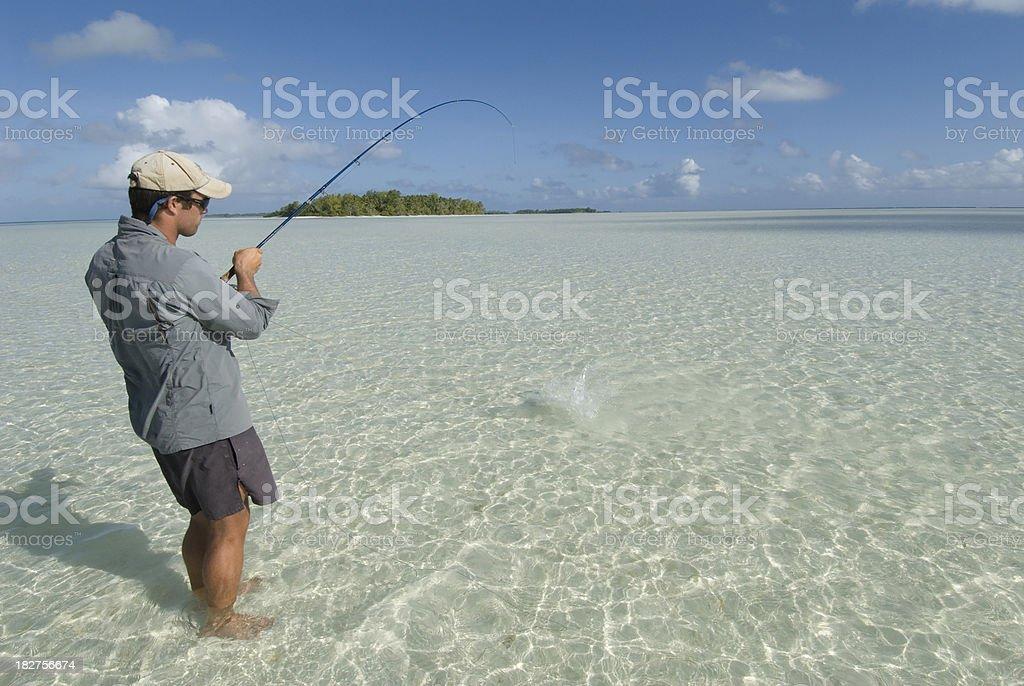 bonefishing in a blue lagoon stock photo