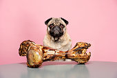 Bones for Dogs Can Be Dangerous